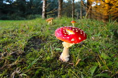 Cogumelo da floresta em cores do Natal Foto de Stock Royalty Free
