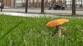 Cogumelo da floresta na rua filme