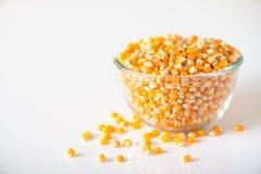 Cogumelo das variedades do milho de semente imagens de stock