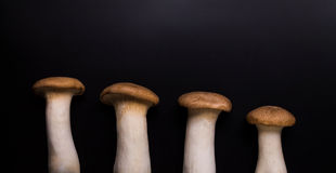 Cogumelo de Eryngii Fotografia de Stock Royalty Free