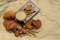 Cogumelo de Lingzhi Fotografia de Stock