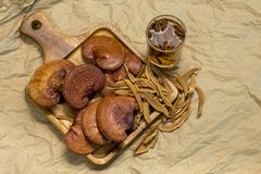 Cogumelo de Lingzhi Foto de Stock Royalty Free