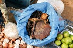 Cogumelo de Lingzhi em um mercado de produto fresco Fotografia de Stock