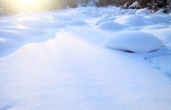 Cogumelo de neve no campo Fotos de Stock Royalty Free
