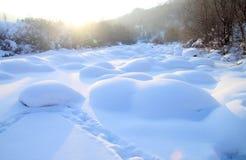 Cogumelo de neve no campo Imagem de Stock Royalty Free