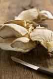 Cogumelo de ostra Imagens de Stock