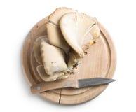 Cogumelo de ostra Imagem de Stock