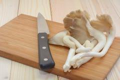 Cogumelo de ostra de Tibet na placa de corte de madeira com a faca, pronta Imagem de Stock