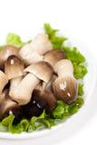 Cogumelo de palha na bacia Imagem de Stock