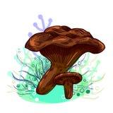 Cogumelo de Paxil ilustração do vetor