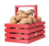 Cogumelo de Portabella Fotos de Stock