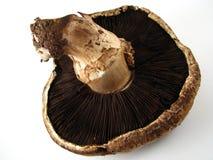 Cogumelo de Portabella Fotos de Stock Royalty Free