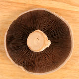 Cogumelo de Portabello Fotografia de Stock Royalty Free