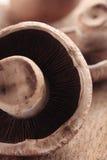 Cogumelo de Portabello Imagens de Stock