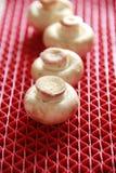 Cogumelo de Portabello no fundo vermelho Imagens de Stock Royalty Free