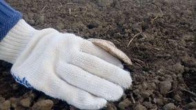 Cogumelo de rasgo do cogumelo Colhendo cogumelos do solo filme