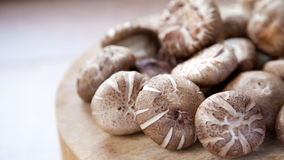 Cogumelo de Shiitake Fotos de Stock