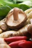 Cogumelo de Shiitake Foto de Stock Royalty Free