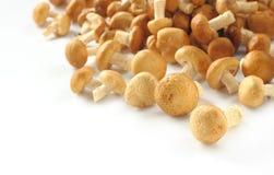 Cogumelo de Shiitake Fotografia de Stock Royalty Free