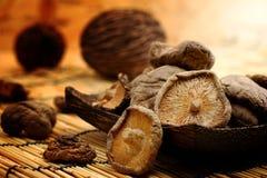 Cogumelo de Shiitake secado no tom da terra da esteira imagem de stock