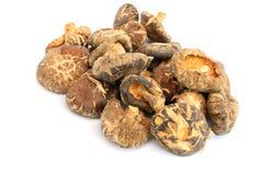 Cogumelo de Shiitake seco imagem de stock