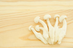 Cogumelo de Shimeji do japonês Fotografia de Stock