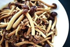 Cogumelo delicioso Foto de Stock