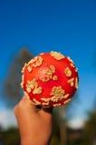 Cogumelo do agaric de mosca Fotografia de Stock Royalty Free