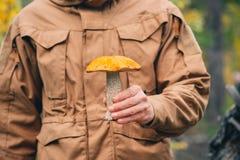 cogumelo do boleto do Alaranjado-tampão na mão do homem Imagens de Stock Royalty Free