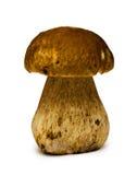 Cogumelo do cepa-de-bordéus Fotos de Stock Royalty Free