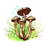 Cogumelo do fungo de mel ilustração stock