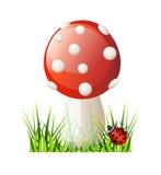 Cogumelo do vermelho do vetor Foto de Stock
