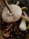 Cogumelo e castanhas selvagens Fotografia de Stock Royalty Free