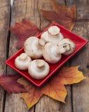 Cogumelo e folhas caídas Imagens de Stock