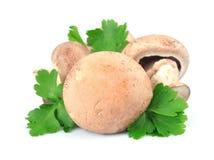 Cogumelo e salsa fresca Imagem de Stock