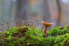 Cogumelo e verde Fotografia de Stock