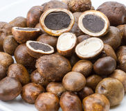 Cogumelo - Earthstars do barômetro no branco Imagens de Stock Royalty Free