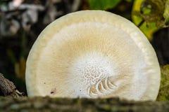 Cogumelo em uma árvore Foto de Stock Royalty Free