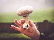 Cogumelo escolhido fresco imagem de stock royalty free