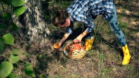 Cogumelo fêmea do boleto da picareta da menina da máquina desbastadora do cogumelo e posto lhe na cesta filme