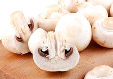 Cogumelo fresco imagem de stock