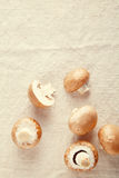Cogumelo fresco do cogumelo fora do fundo branco Foto de Stock Royalty Free