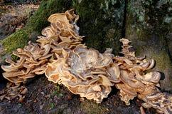 Cogumelo grande em um tronco de árvore fotos de stock