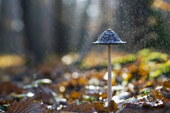 Cogumelo na chuva Imagens de Stock