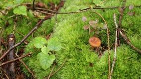 Cogumelo na floresta video estoque
