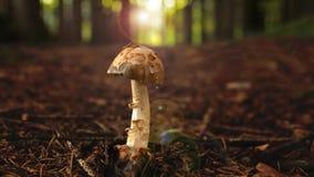 Cogumelo na floresta do verde do verão video estoque