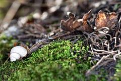 Cogumelo na floresta V imagens de stock