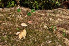 Cogumelo na floresta XI imagens de stock royalty free