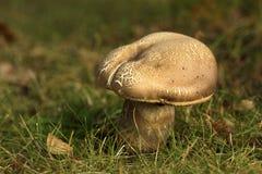 Cogumelo na grama imagem de stock