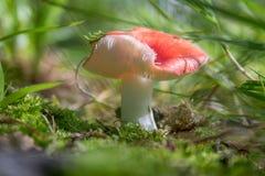 Cogumelo nas madeiras no parque do telhador foto de stock royalty free